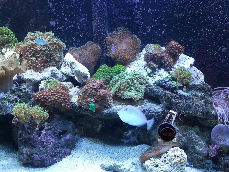 Coral mid.jpg