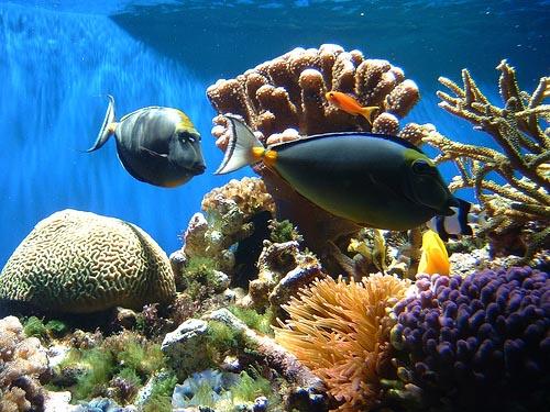 coral-reef2.jpg