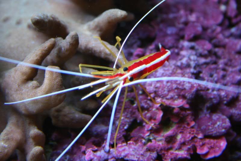 coral00009.jpg