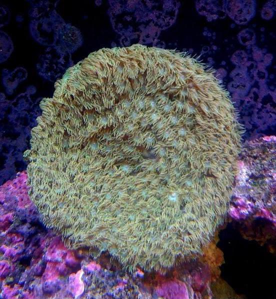 coral00012.jpg