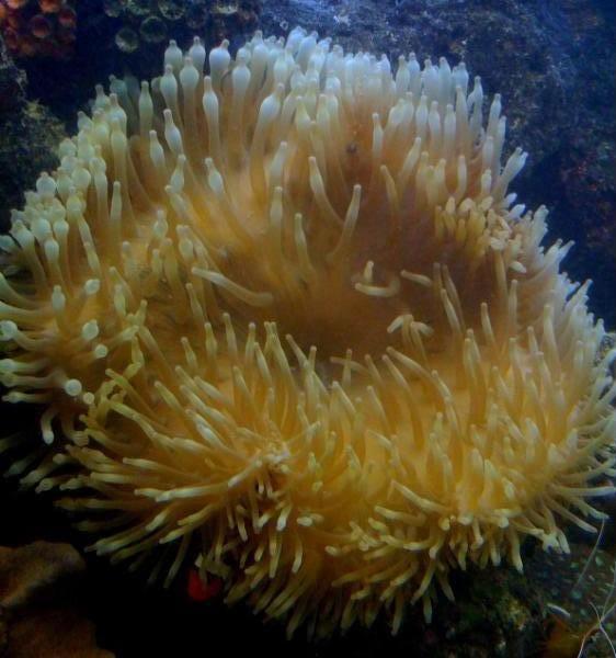 coral00013.jpg