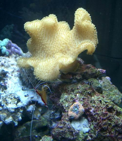 coral19.jpg