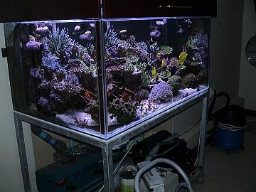 coral2062008 001.jpg