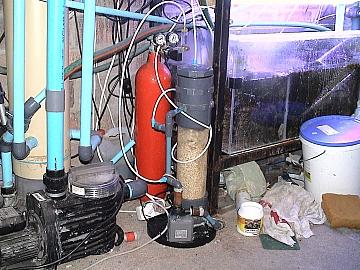 coral2062008 006.jpg