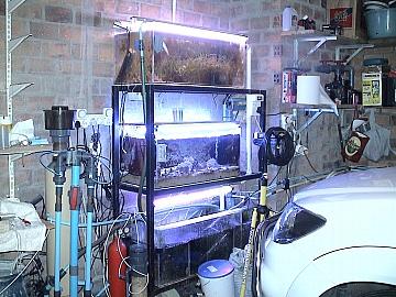 coral2062008 008.jpg