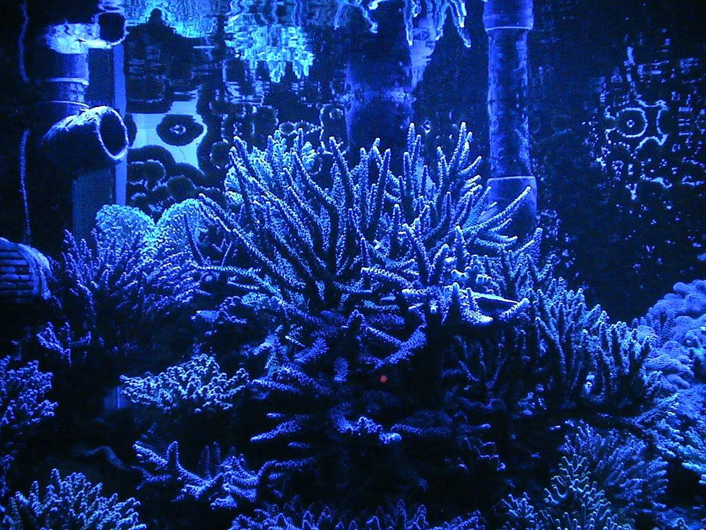 coral2062008016.jpg