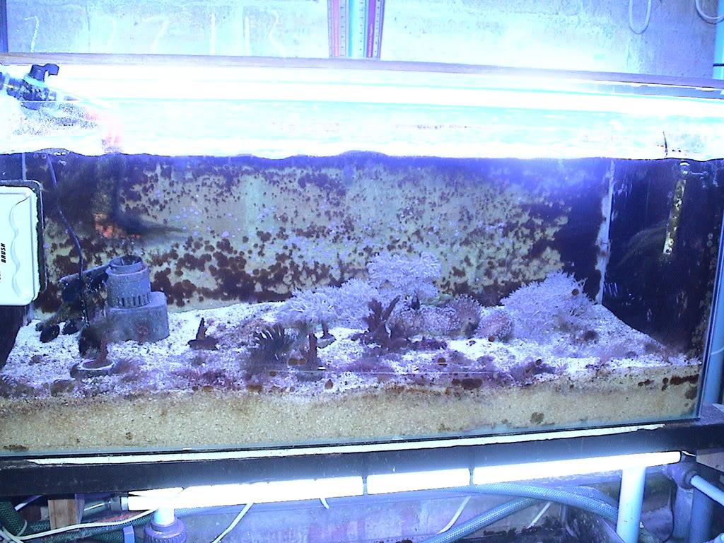 coral2062008029.jpg