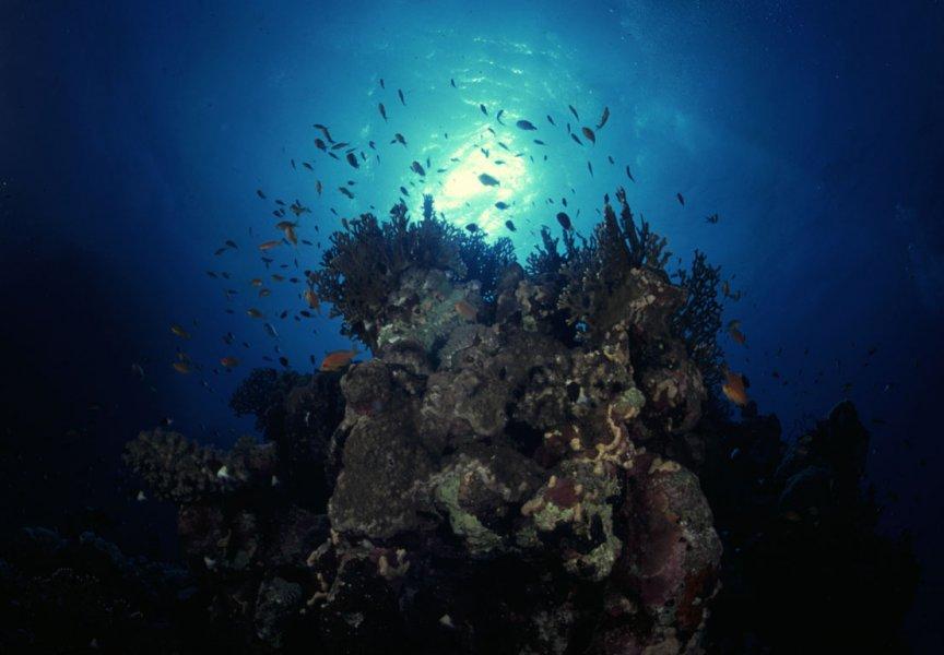 CoralHead_13_4b.jpg