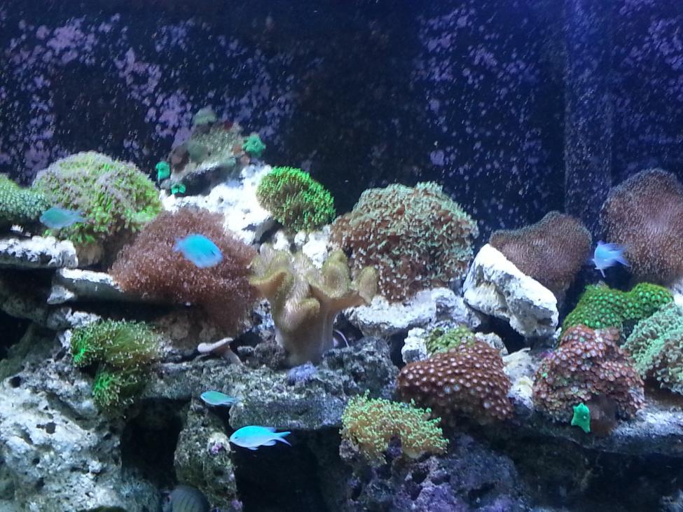CoralMid 2.jpg