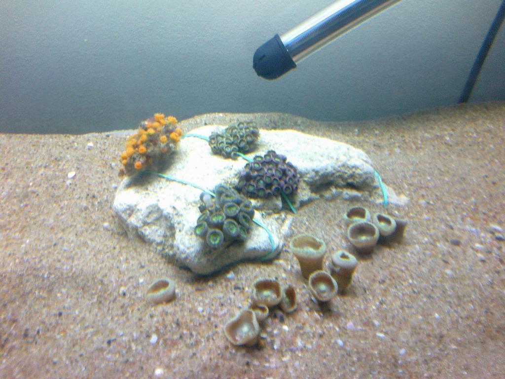 Corals 0.jpg