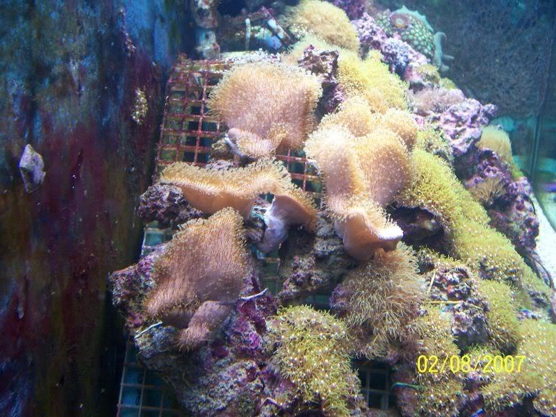 Coralsforsale001.jpg