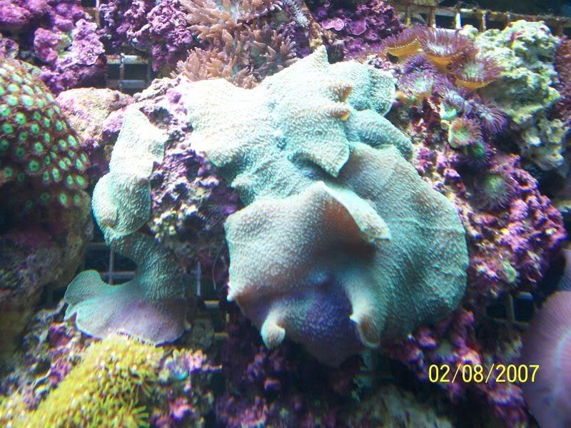 Coralsforsale002.jpg