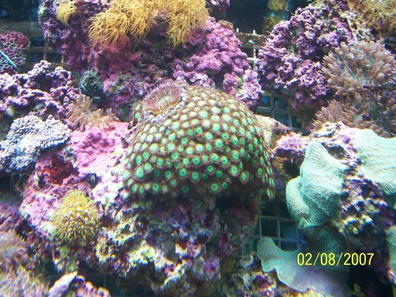 Coralsforsale004.jpg
