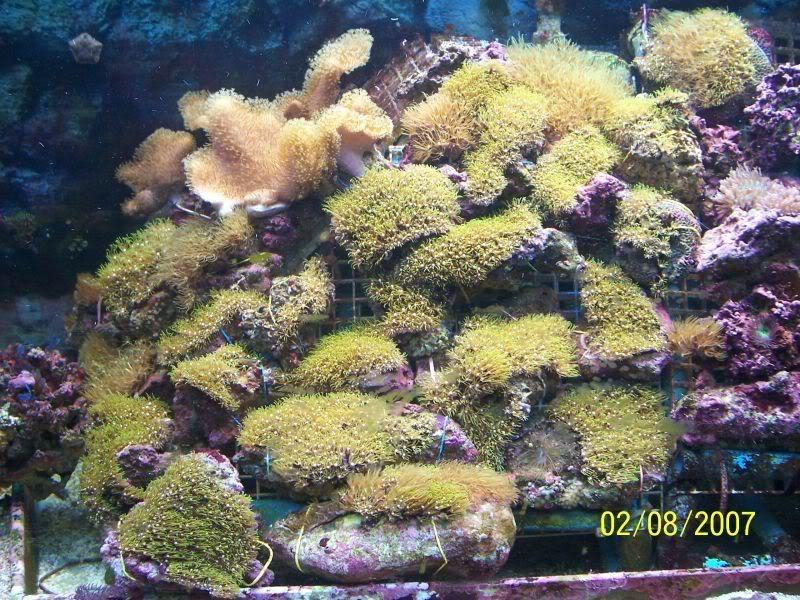 Coralsforsale005.jpg
