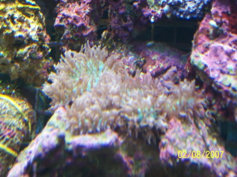 Coralsforsale006.jpg