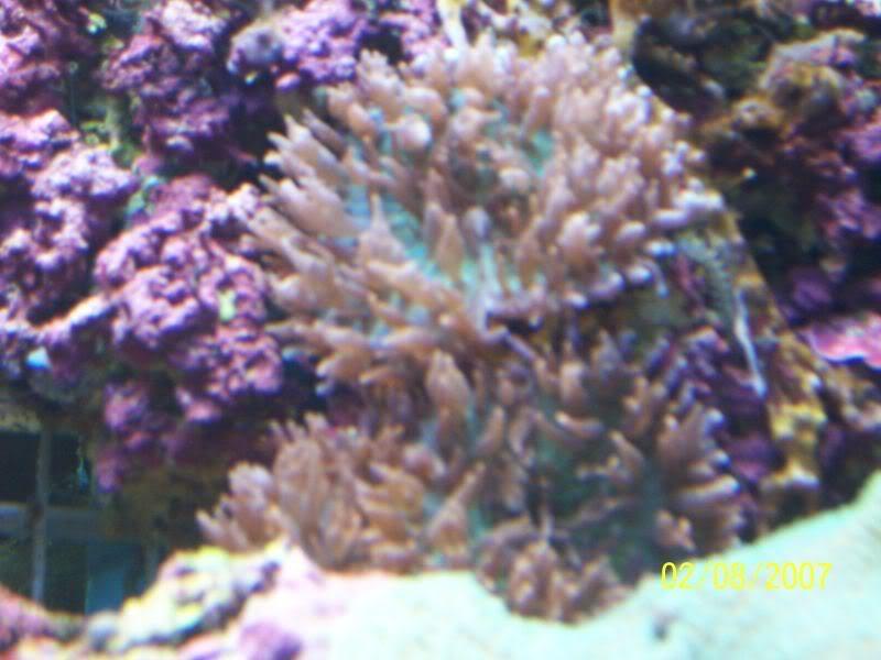 Coralsforsale007.jpg