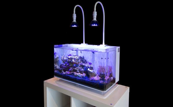 coumpulsive-corals-led-lamp.jpg