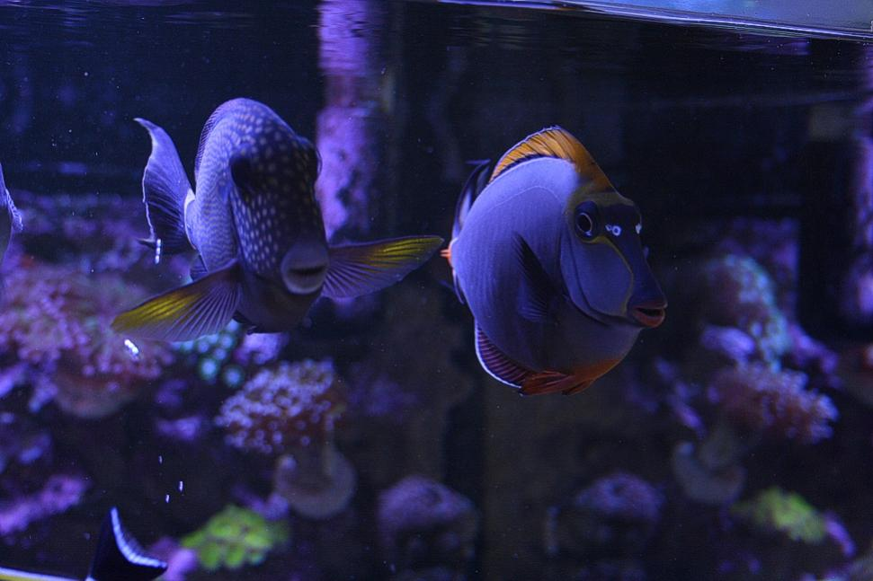 Couple of tangs 01032013.jpg