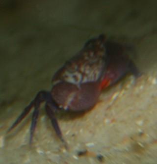 Crab_1.jpg