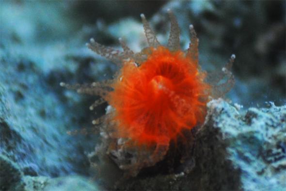 cup coral2.jpg