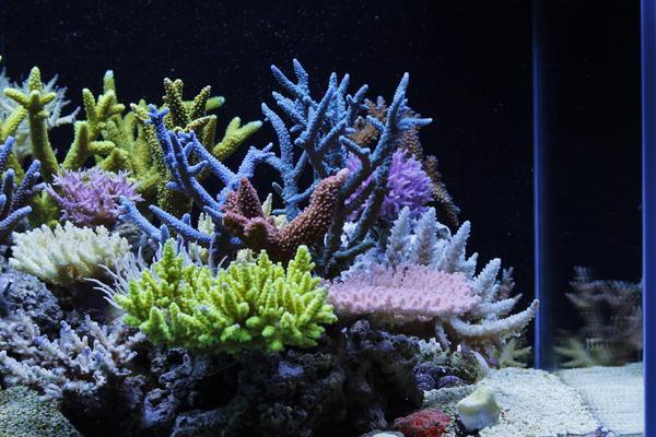 Dakkang-Reef-3.jpg