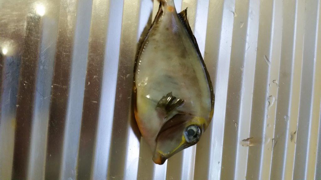 Dead fish.jpg