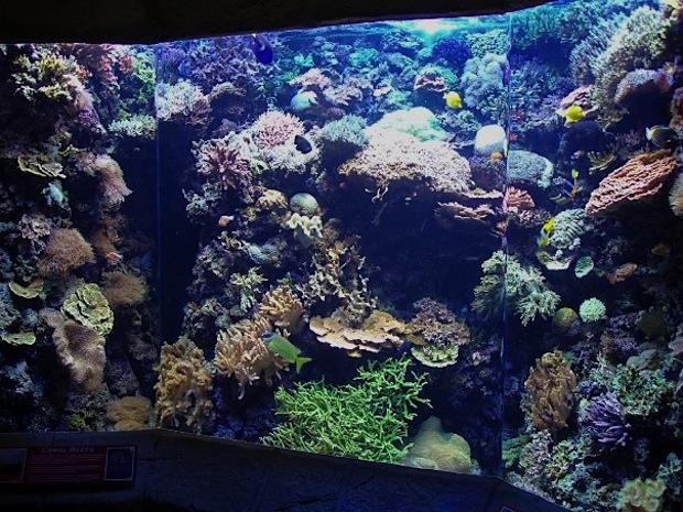 denver-downtown-aquarium-5000-reef.jpg