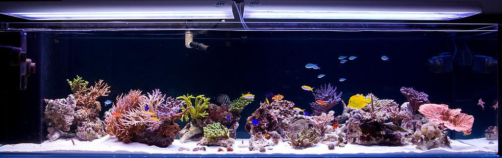 dk-reef.jpg