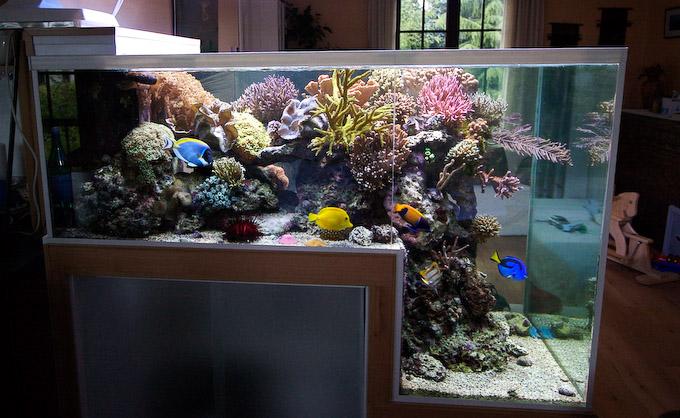 dropoff-reef-aquarium-6.jpg