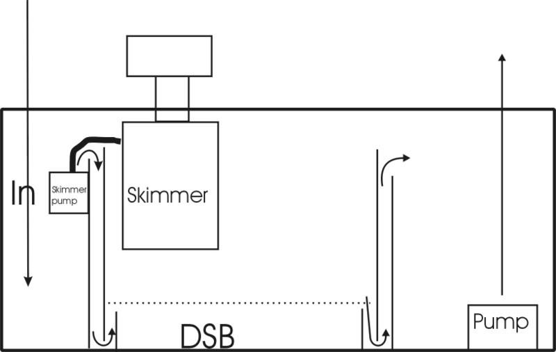 DSB2.jpg