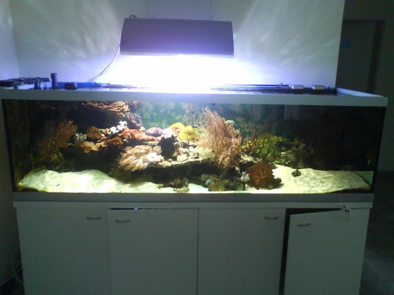 Plasma Lights Hit Sa Shores Marine Aquariums South Africa