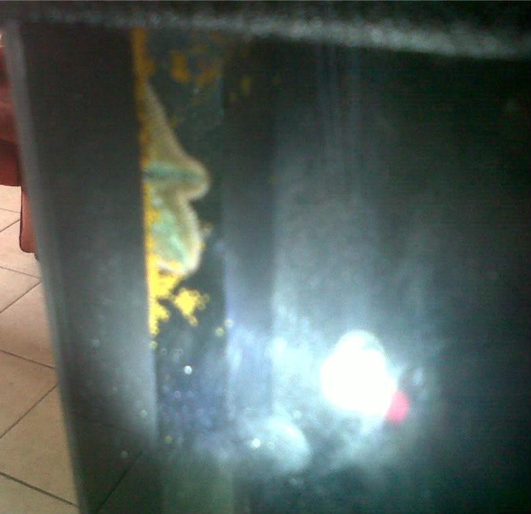 Durban-20110723-00081-1.jpg
