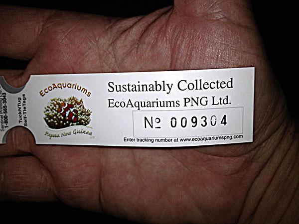 eco_unique.jpg