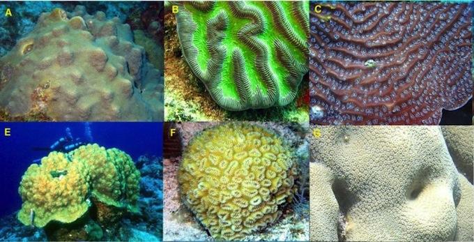 endangered-coral-species1.jpg