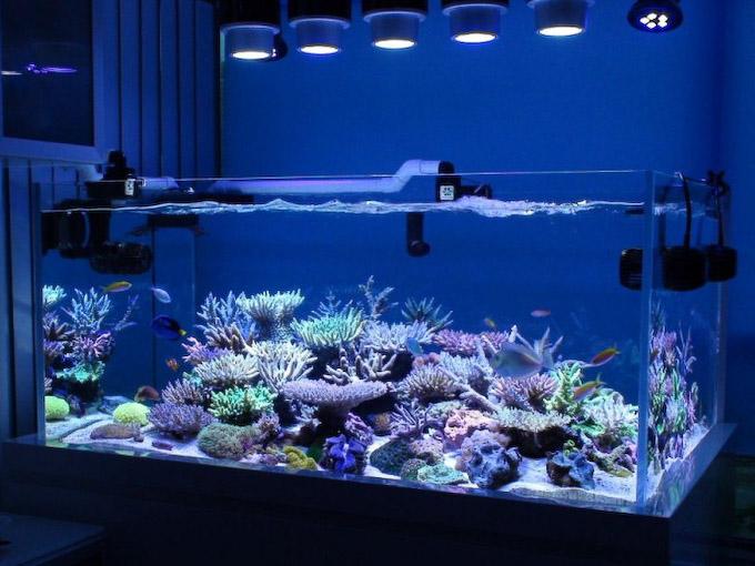 evan-tsang-reef.jpg