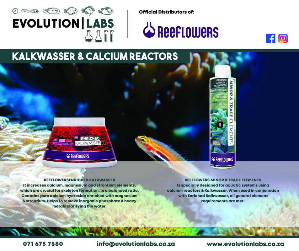 Evolution-Labs-ad-Reeflowers-2.jpg