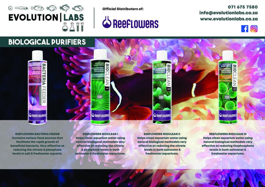 Evolution-Labs-ad-Reeflowers-6.jpg