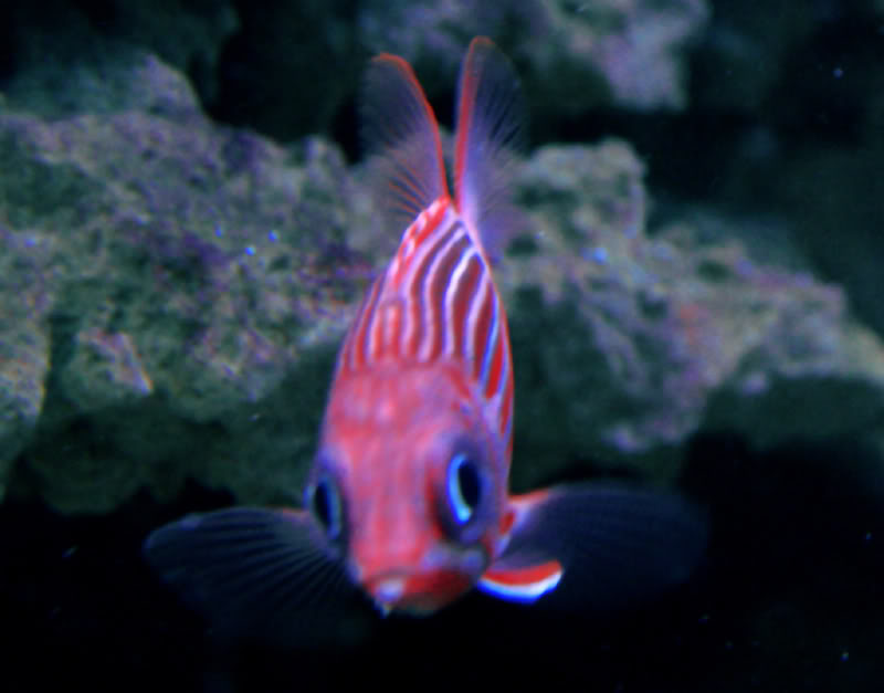 eyeshotsquirrelfish.jpg