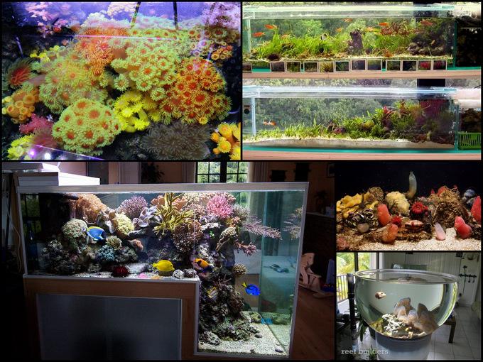 Feautered-reefs.jpg