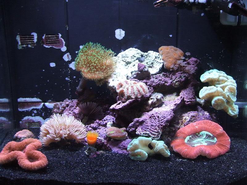 Hawaain black aragonite yay or nay marine aquariums for Black sand fish tank