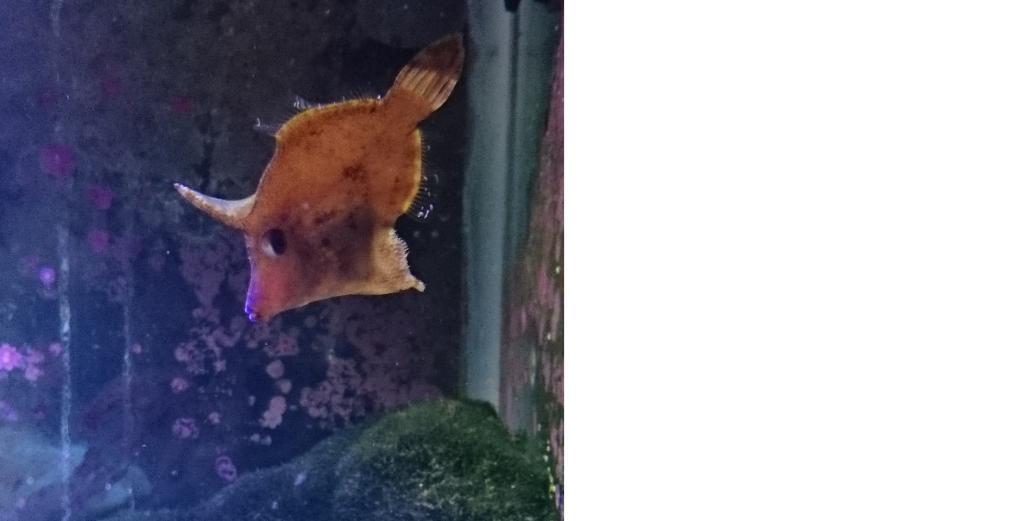File Fish.jpg