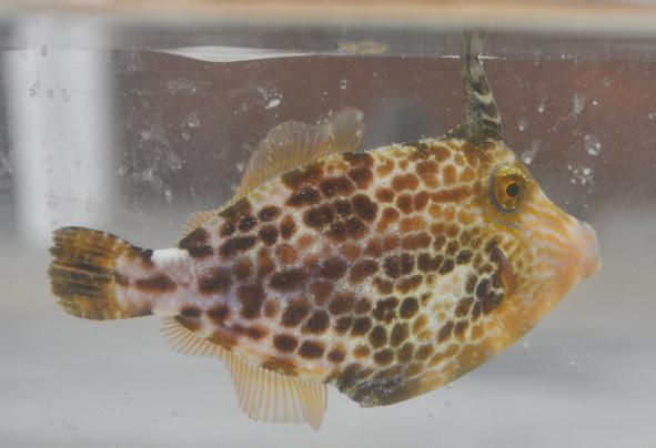 filefish1.jpg