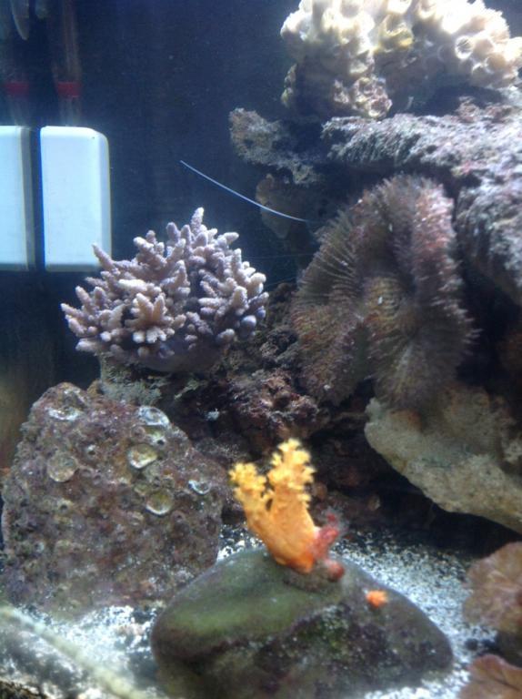 finger leather coral.jpg