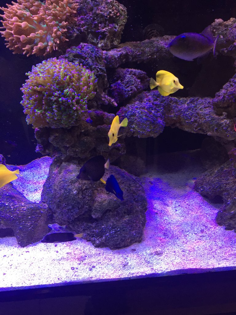 Fish 3.JPG