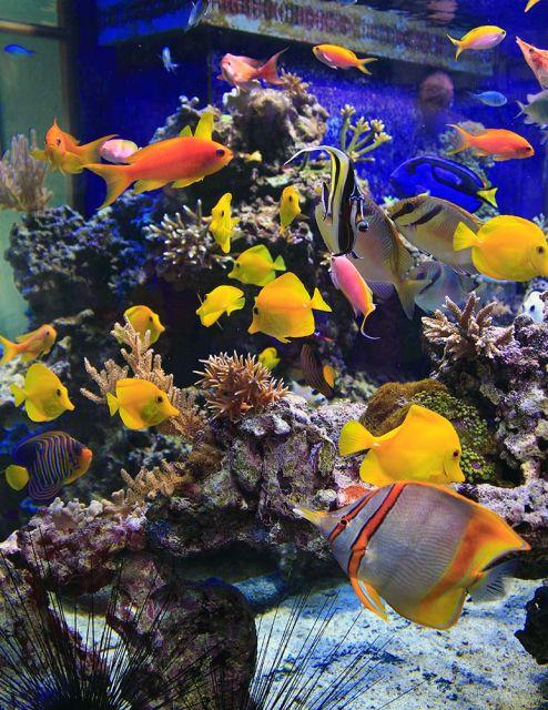 fish22web.jpg