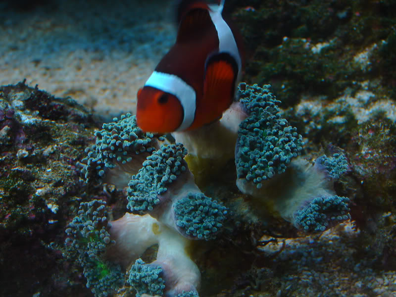 Fish275.jpg