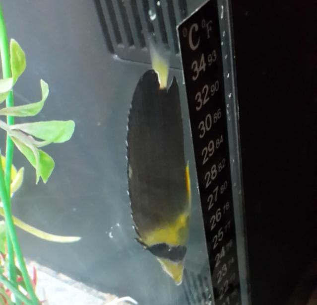 fishID.jpg