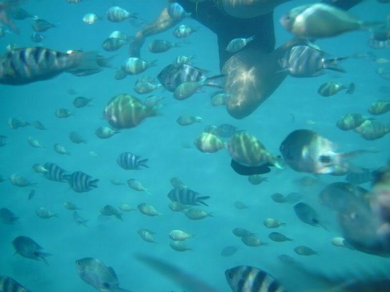 fishinwater.jpg