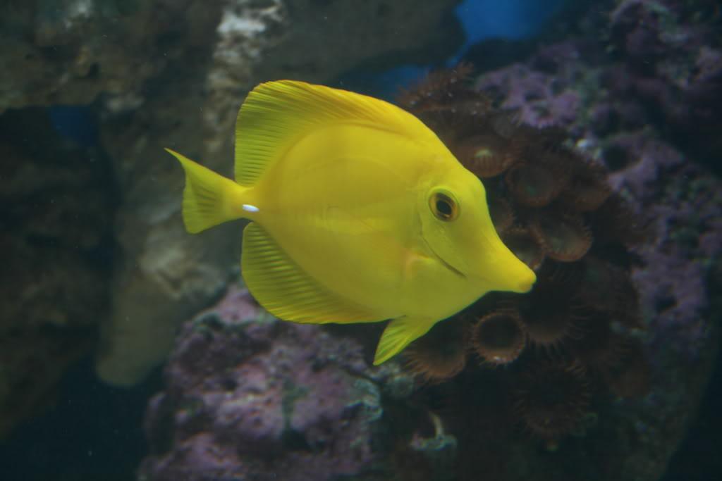 FishTank017.jpg