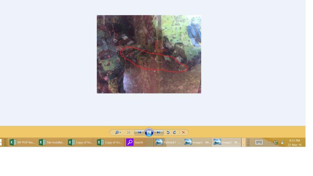 Fishtank2 CLoseup.jpg